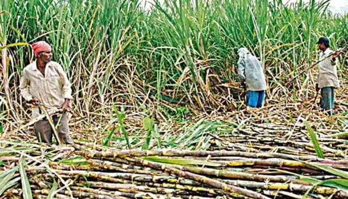 Modi Cabinet Decisions: શેરડીના ખેડૂતો માટે ખુશખબરી, સરકારે આટલા વધાર્યા શેરડીના ભાવ