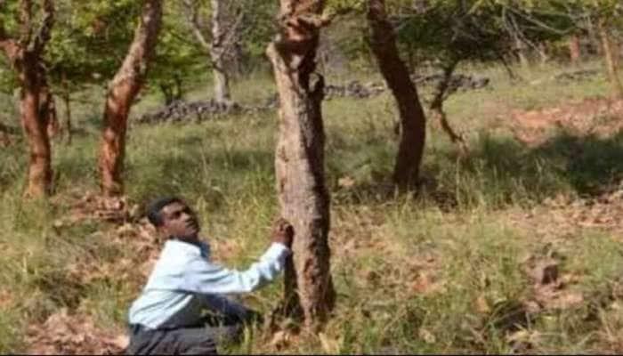 વૃક્ષને પણ માણસની જેમ થાય છે ગલીપચી! અડતાની સાથે જ હલી જાય છે આ ઝાડની દરેક ડાળીઓ!