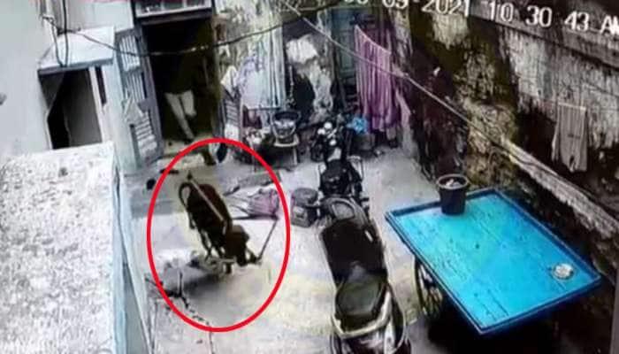 જામનગરમાં રખડતા ઢોરનો આતંક જુઓ CCTV માં, ઘરમાં ઘૂસીને બાળકનું ઘોડિયું ખેંચીને લઈ ગયું...