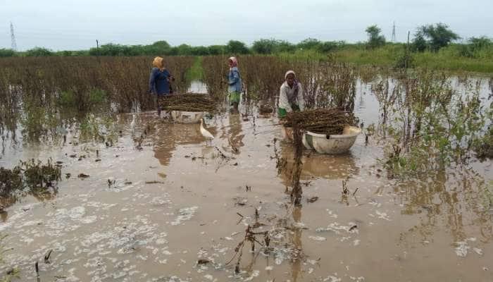 ભાવનગરમાં મીઠાના અગરોએ ખેડૂતોની મહેનત પર પાણી ફેરવી નાંખ્યું