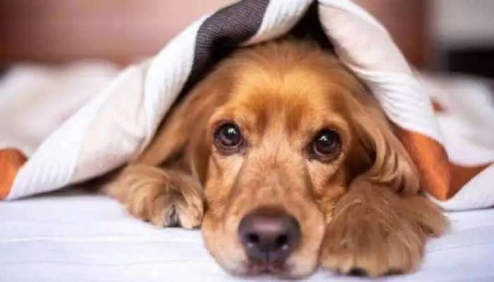 અંતરિક્ષમાં સૌથી પહેલાં ગયો હતો કુતરો! કુતરા પણ જોઈ શકે છે સારા સપના! જાણો કેટલીક રોચક હકીકતો